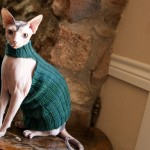 Queen Bean Sphynx Sweater